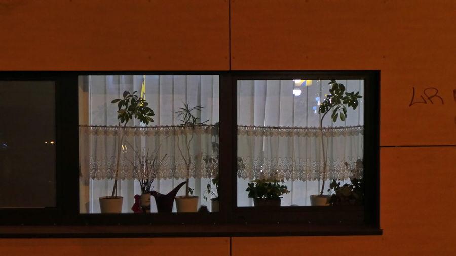 Architecture Architektur Fenster Und Türen Leipzig Nachtaufnahme Nachtfotografie Nightphotography Nightshot Windows And Doors Blumentopf Flower Pot Flower Pots Blumentöpfe