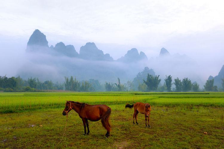 Vietnam highland Vietnam Highlands Highland In Vietnam Moutain Moutainscape