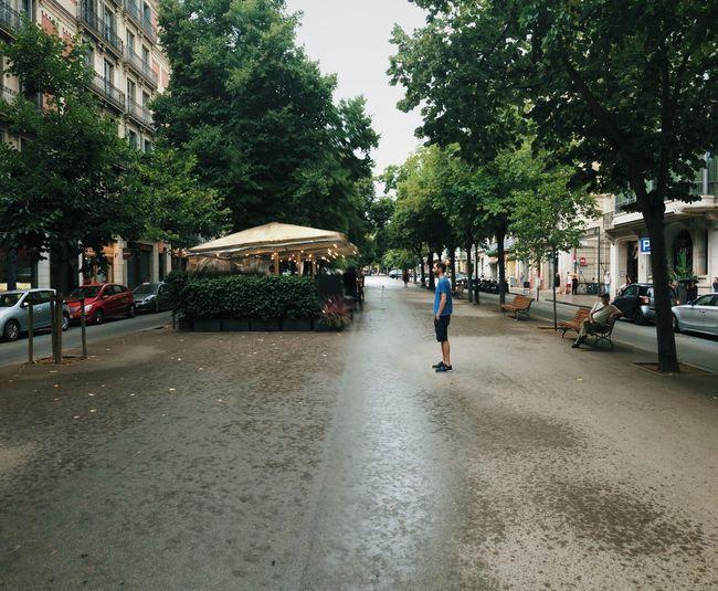 People walking on street by trees in city