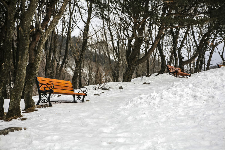 Low Angle View Of Bench Against Trees On Snow Covered Mountain