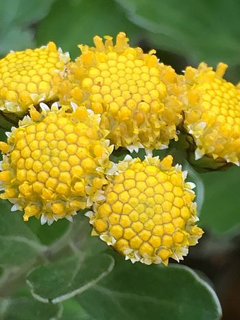 Yellow Flower Freshness Fragility Nature Close-up Petal Growth Beauty In Nature Day No People Outdoors Flower Head