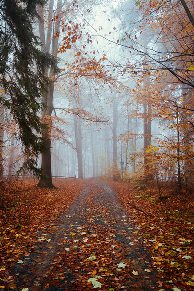Autumn Beauty In Nature Day Explore Fall Fall Colors Fog Forest Landscape Leaf Nature No People Outdoors Scenics Tranquility Travel Traveling Tree Weather The Great Outdoors - 2017 EyeEm Awards