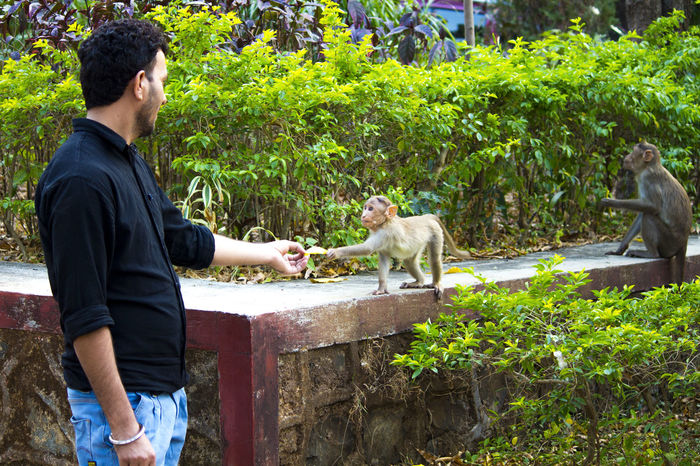 Feeding monkey baby @ National Park Mumbai Animal Themes Attraction Cute Hello Feeding Animals Feeding Monkeys Feeding Time Hello To Monkey Mammal Man Fishing Monkey And Human Interaction Monkey And Man Monkey Baby  One Animal One Man Only Outdoors Pets Tree
