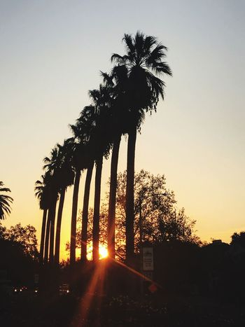 Tree Palm Tree Sunrise Growth No People Silhouette Tree Trunk Nature Outdoors Beauty In Nature Clear Sky Scenics Sky Day Lost In The Landscape