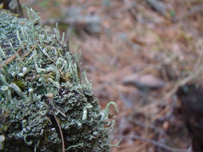 EyeEmNewHere Lichen Moss & Lichen The Week On EyeEm Tree Trunk Lichen On A Tree Lichens On Tree Moss