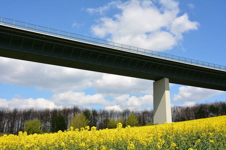 Low angle view of bridge over oilseed rape