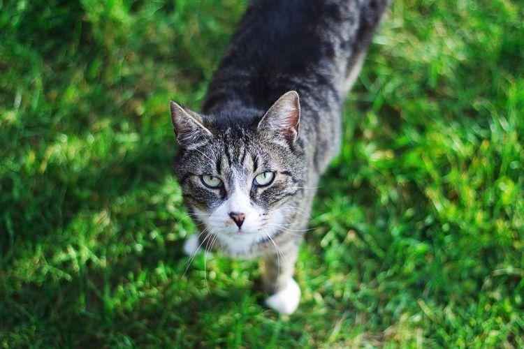 Katze Cat Blick Augen Eyes Katzenaugen Grün Getigert A Bird's Eye View Pet Portraits