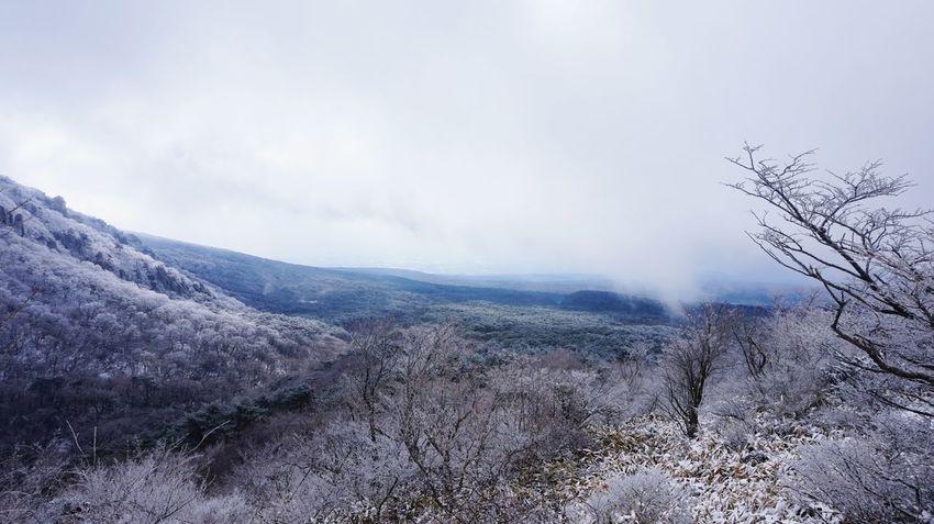Nature Fog No People Outdoors Beauty In Nature Mountain Tree Snowcapped Mountain The Great Outdoors - 2017 EyeEm Awards Korea Jeju JEJU ISLAND  한라산  Hanla Moutain