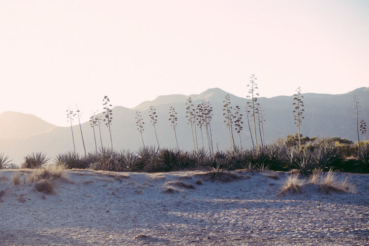 Plants Growing At Desert Against Mountains