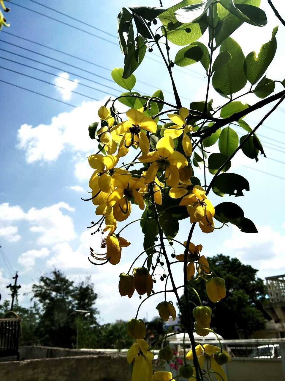 LOW ANGLE VIEW OF YELLOW FLOWERS AGAINST SKY