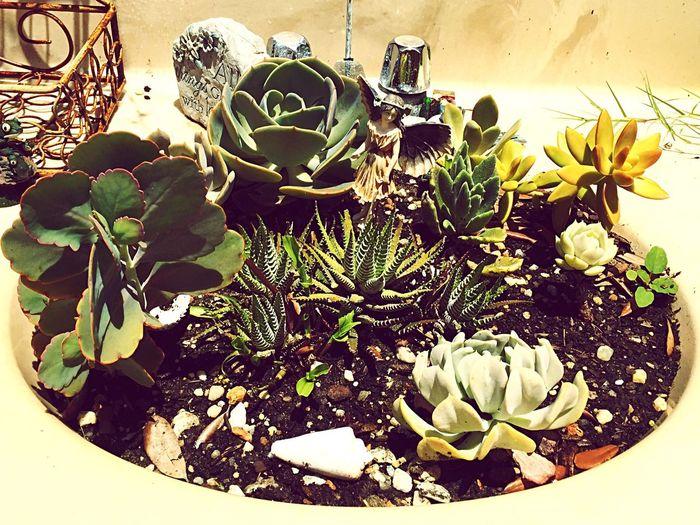Enjoying Life Bonding With My Ginger Bf 💕 Gypsylife Brevardsbest Doghairstudio In My Garden Creative Gardening Repurposed Sink