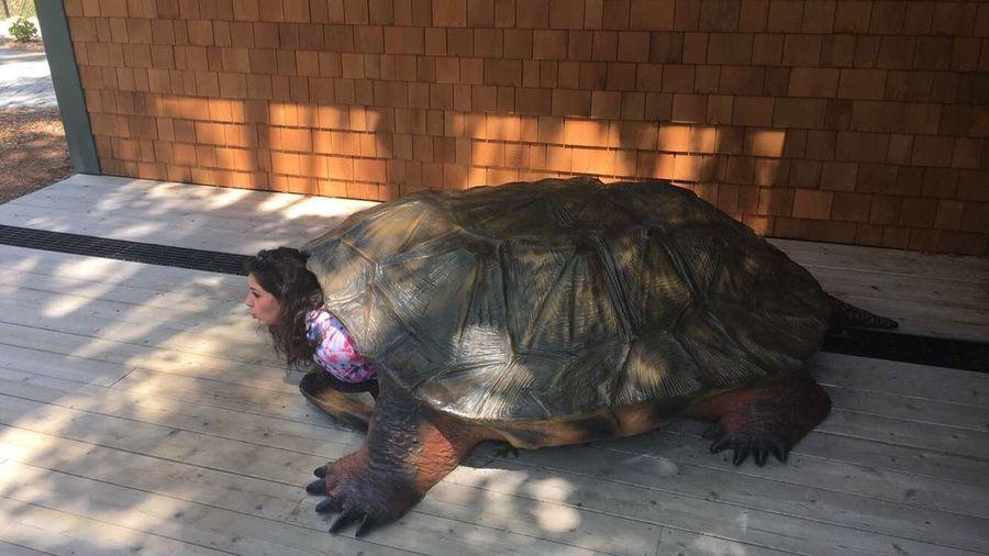 Turtle-heading