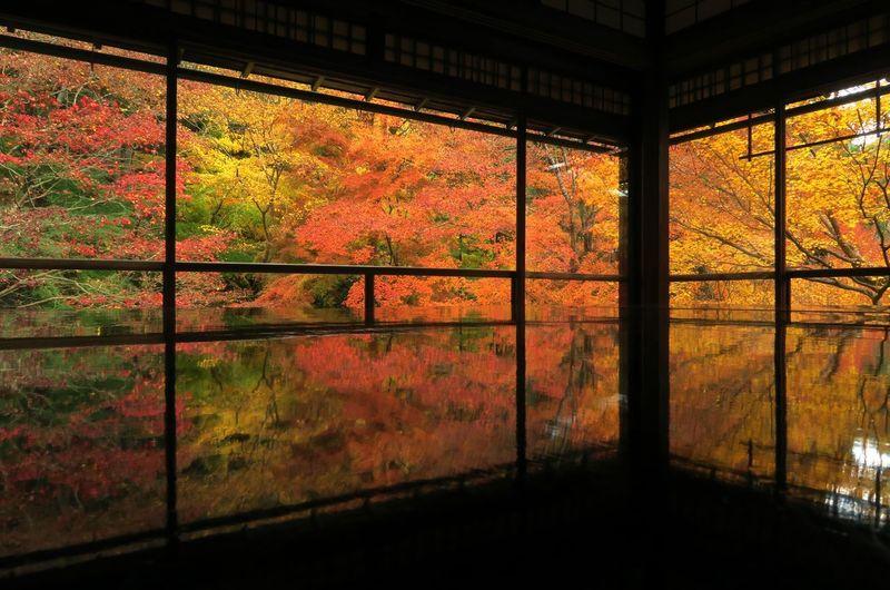 Trees seen through window of building