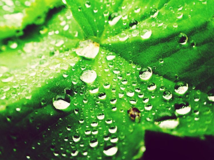 Leaf Drop Green Color Water Nature Close-up Wet No People Day Freshness Plant Fragility RainDrop Beauty In Nature Growth Outdoors Grass Nature EyeEmNewHere