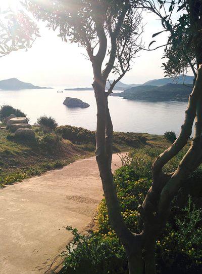 Cape Sounion, Greece. Sea Greece Nature Landscape Popular Photos Sunlight Trees Beautiful Ataraxy Countryside