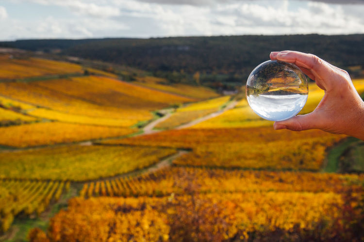 Cropped hand of woman holding crystal ball against landscape