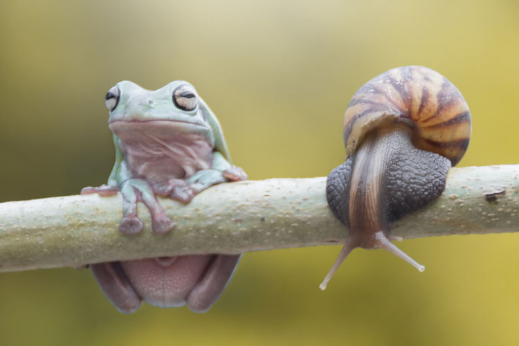 tree frog and mantis Animal Themes Animal Animal Wildlife Animals In The Wild Vertebrate One Animal Close-up Nature Focus On Foreground No People Day Reptile Outdoors Animal Body Part Selective Focus Zoology Plant Care