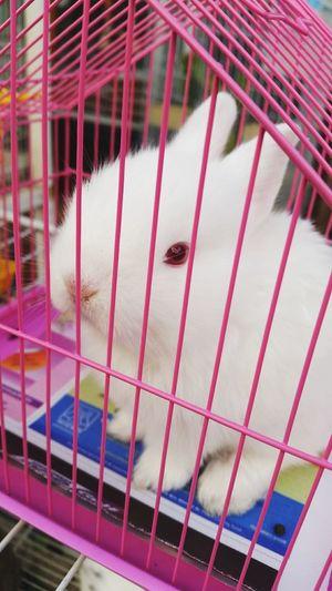 Rabbit 🐇 Pink Cage