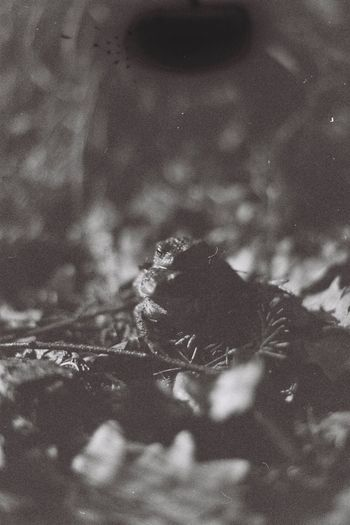 Love Love Frogs Frog Film Forest Filmphotography Bw_collection Blackandwhite Film Photography Nature Full Frame Outdoors Backgrounds No People Day Animal Themes High Angle View Textured  Auto Post Production Filter Animal Vertebrate One Animal Sky Land Beauty In Nature Tree Digital Composite