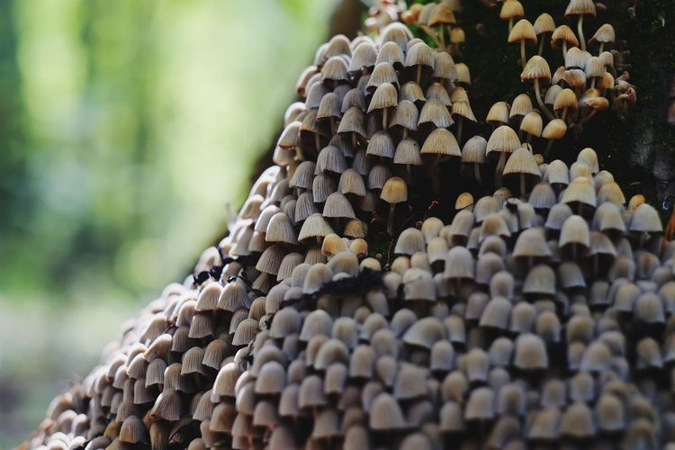 Close-up of stack of tree in forest