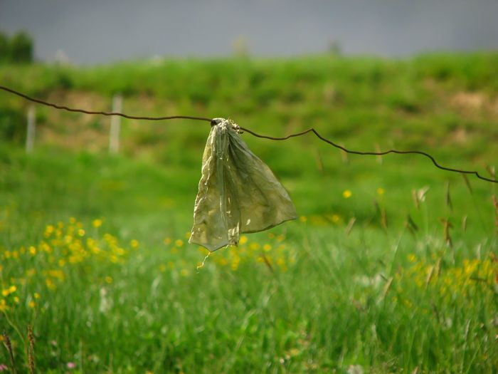 Plastic Bag Day Electric Fence Focus On Foreground Grass Hanging Nature No People Outdoors