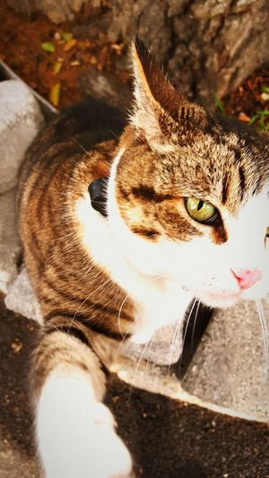 Hi! Close Up (:  Cool Cat(: On The Clock