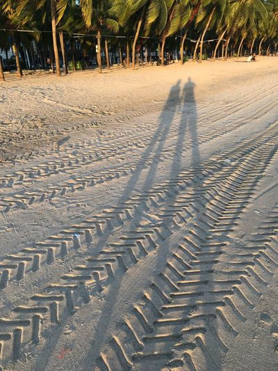 Long legs couples Comedy Sunlight Nature Land Day Tree Plant No People Shadow Sand Beach Growth Direction