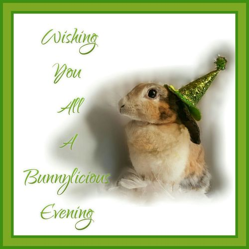 Wishing You All A Bunnylicious Evening Text One Animal Green Color Zoology Selective Focus Animal Head  Animal Samsung Photography AMPt_community Tadaa Community Samsungphotography Samsung Galaxy S6 My Sweet Bunny  Samsung Phone PhonePhotography Mammal Domestic Animals Pet Rabbit My Bunny