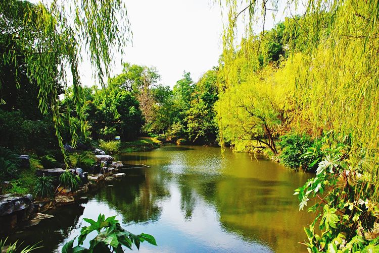 Tree Nature Beauty In Nature Water Outdoors Scenics River Tranquil Scene Day Reflection Leaf Plant Landscape No People Growth Tranquility Forest Travel Destinations Sky