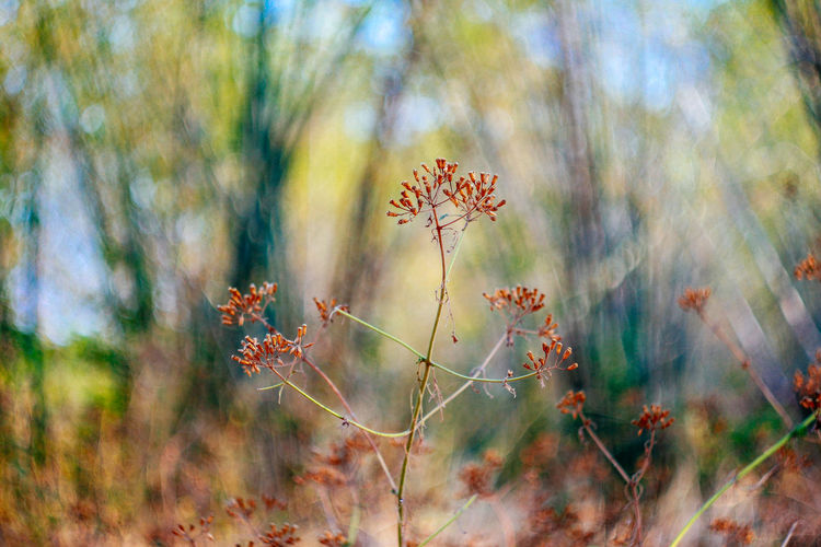 Plant Growth Beauty In Nature Vulnerability  Fragility Nature Day Flowering Plant Flower Focus On Foreground Close-up No People Tranquility Field Land Selective Focus Freshness Outdoors Autumn Inflorescence Flower Head Change