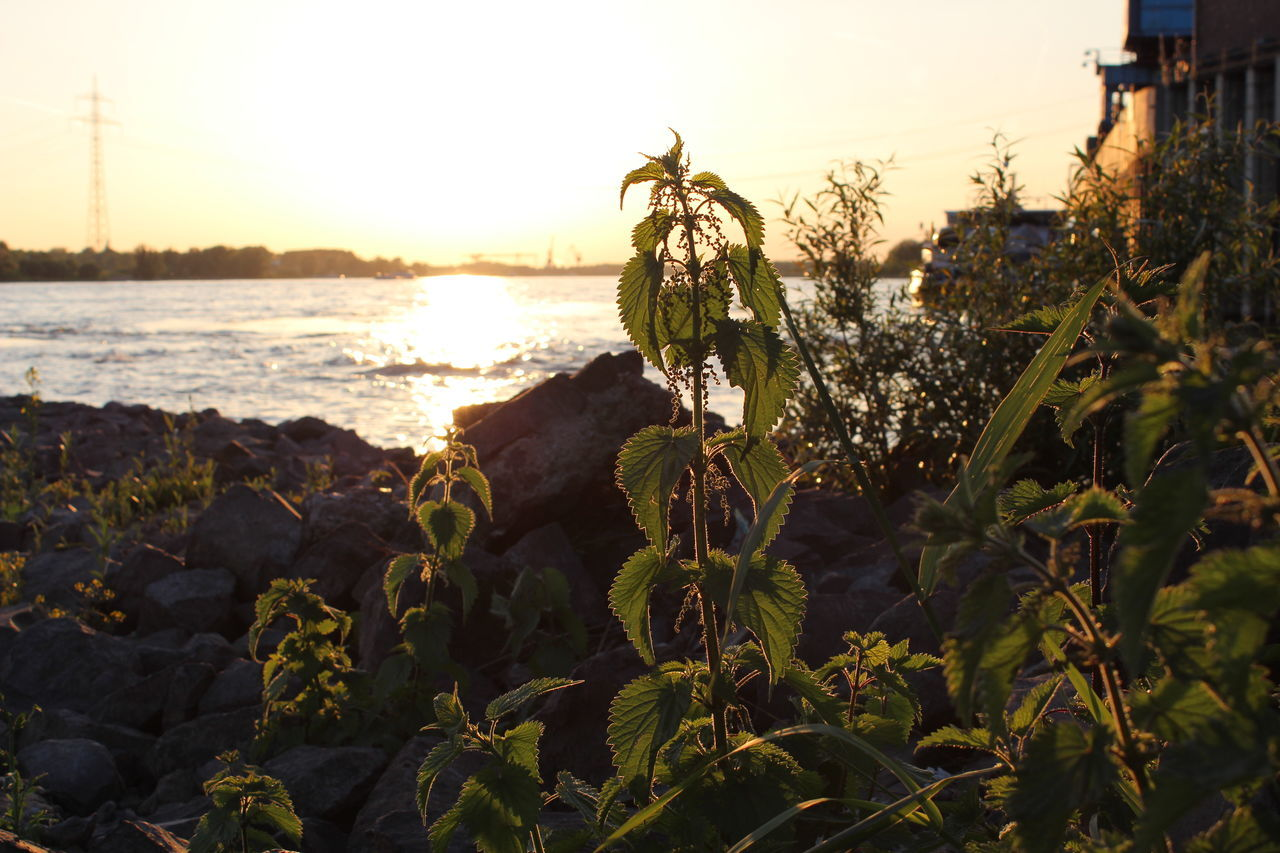 Close-Up Of Plants Growing By Sea Against Sky During Sunset