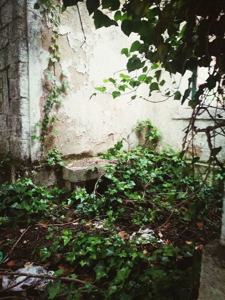 Plant Growth Day No People Green Color Outdoors Nature Water Ivy Architecture Close-up Built Structure Abandoned Buildings Abandoned Places Abandon_seekers Abandoned House