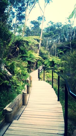Bluemountains Newsouthwales Blue Mountains Katoomba Australia Exploration Mountain Nature Tranquility No People Forest Tree Day Travel Beauty In Nature Australie Art Is Everywhere