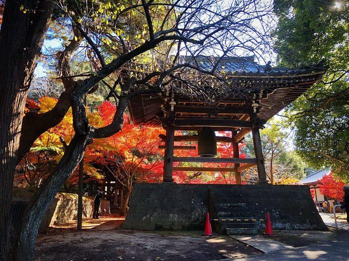東漸寺 松戸 Chiba,Japan Autumn Autmn Colors Autumn Leaves Beauty In Nature 紅葉 近所 Japan Photos 3XSPUnity Japan Photography Relaxing Relaxation Enjoying Life