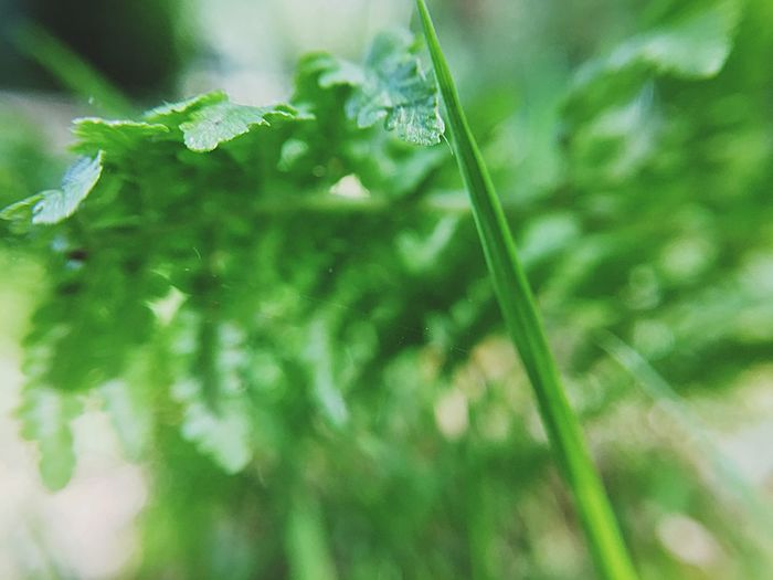 Grass Green Color Plant Growth Close-up Plant Part Beauty In Nature Leaf Nature Freshness No People Day Selective Focus Focus On Foreground Outdoors Backgrounds Fragility