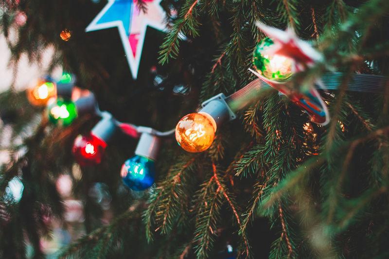 Close-up of illuminated christmas tree