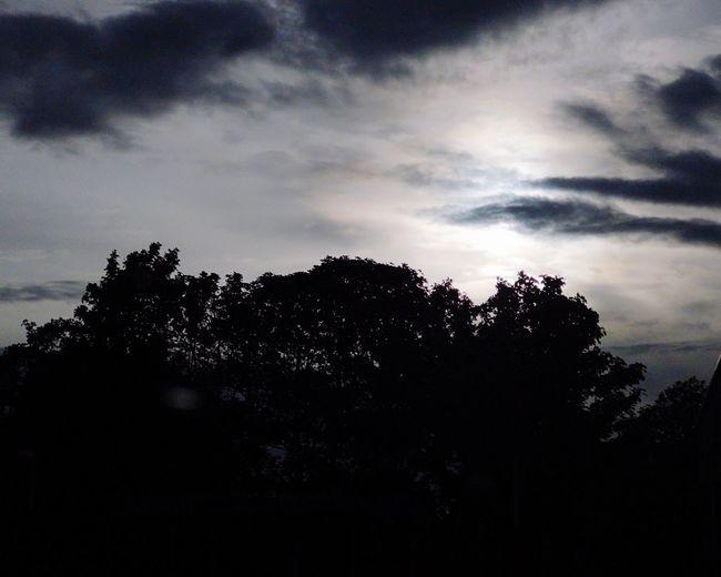 Silhouette Clouds And Sky Sunbeam Clouds & Sky Clouds Silhouette Tree Silhouette Sky Cloud - Sky Treetop Storm Cloud Dramatic Sky Atmospheric Mood Cumulonimbus Overcast