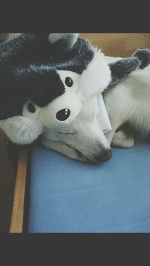 Long Time No See I Love My Dog White Baby the final exam end!! So tired~ Zzz