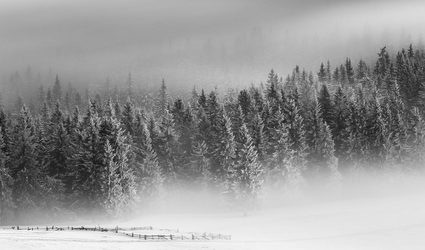 Scenic view of forest during winter