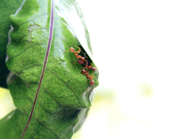 Ants Insect Plant Ant Green Color Beauty In Nature No People Macroshot First Eyeem Photo