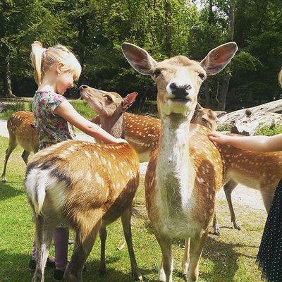 En tur i dyreparken❤ Alma elsker at snakke med dyrene Weekendudfordring Telenorsfotoskole
