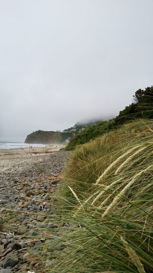 Ocean Oceanside Cool Weather Grass Beauty In Nature Beach Sand