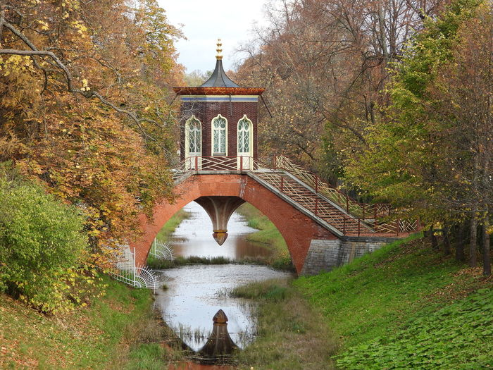 Arch bridge over river in forest during autumn