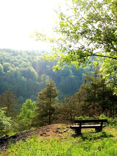 Beauty In Nature Bench Day Enjoy Enjoy The Nature Enjoy The Silence Forest Freshness Growth Landscape Lush - Description Mindfulness Mountain Nature No People Outdoors Pine Woodland Plant Relax Relaxation Scenics Sky Take A Rest EyeEmNewHere First Eyeem Photo