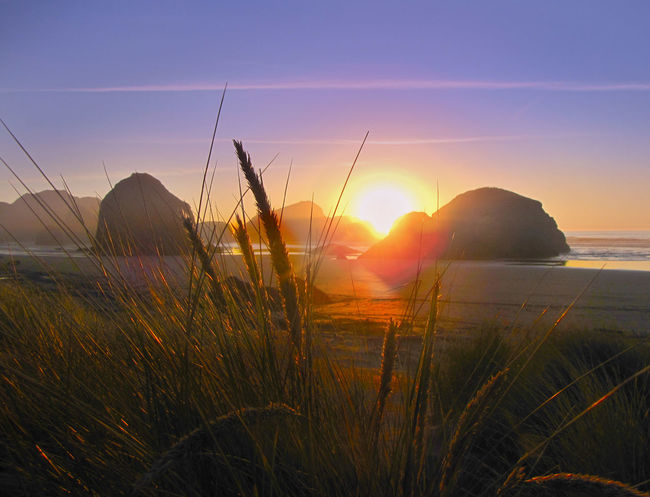 Gold Beach Gold Reeds Golden Weed Ocean Rocks Sky Sun Sunset