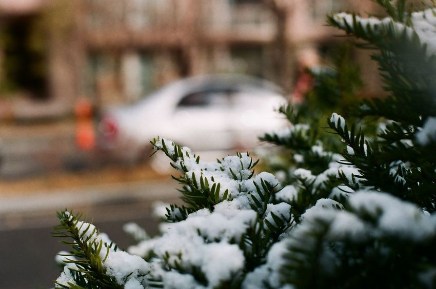 Cold Temperature No People Snow Winter Tradition Christmas Ornament Christmas Tree Christmas Decoration Celebration Christmas EyeEm Selects 눈 흰눈
