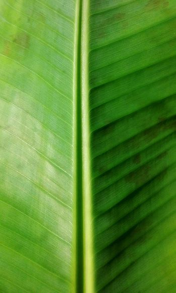 Banana Leaf Green Chlorophyll Pattern, Texture, Shape And Form Pattern Pieces
