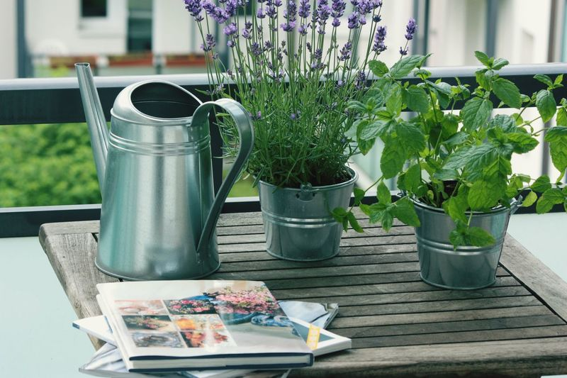Close-Up Of Magazines By Watering Can By Houseplants On Table