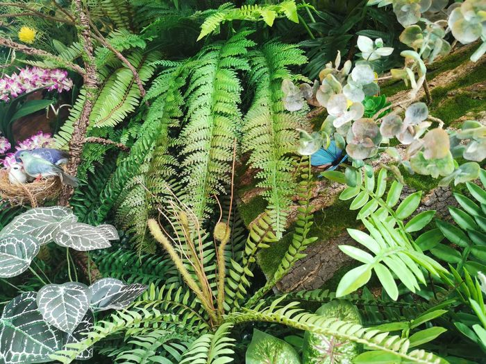 High angle view of fern amidst trees