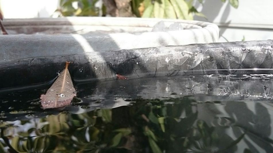 枯れ葉 水 反射 凍り 影